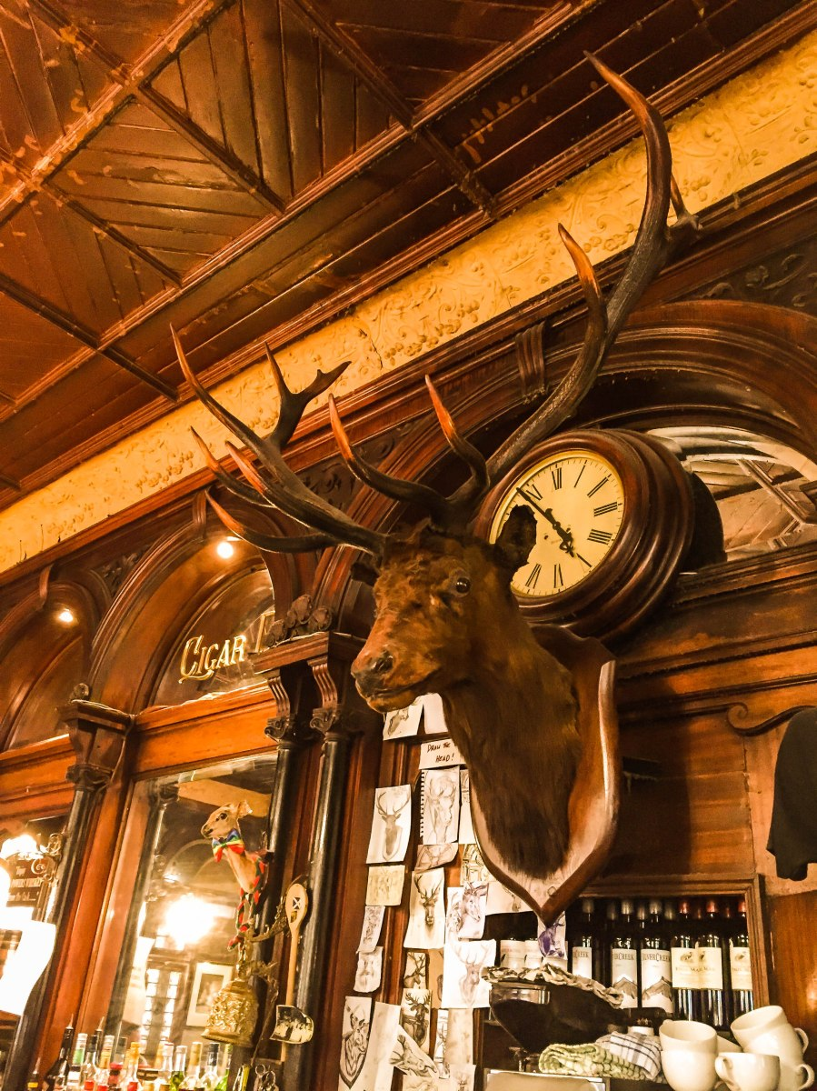 stags head-2598