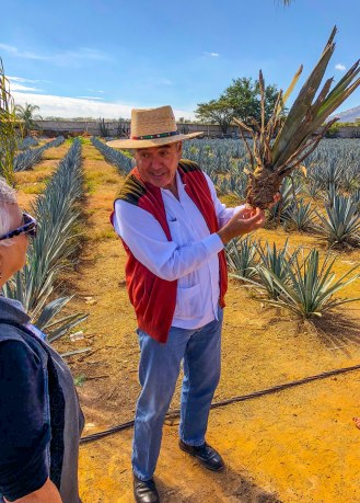 agave plant-2453